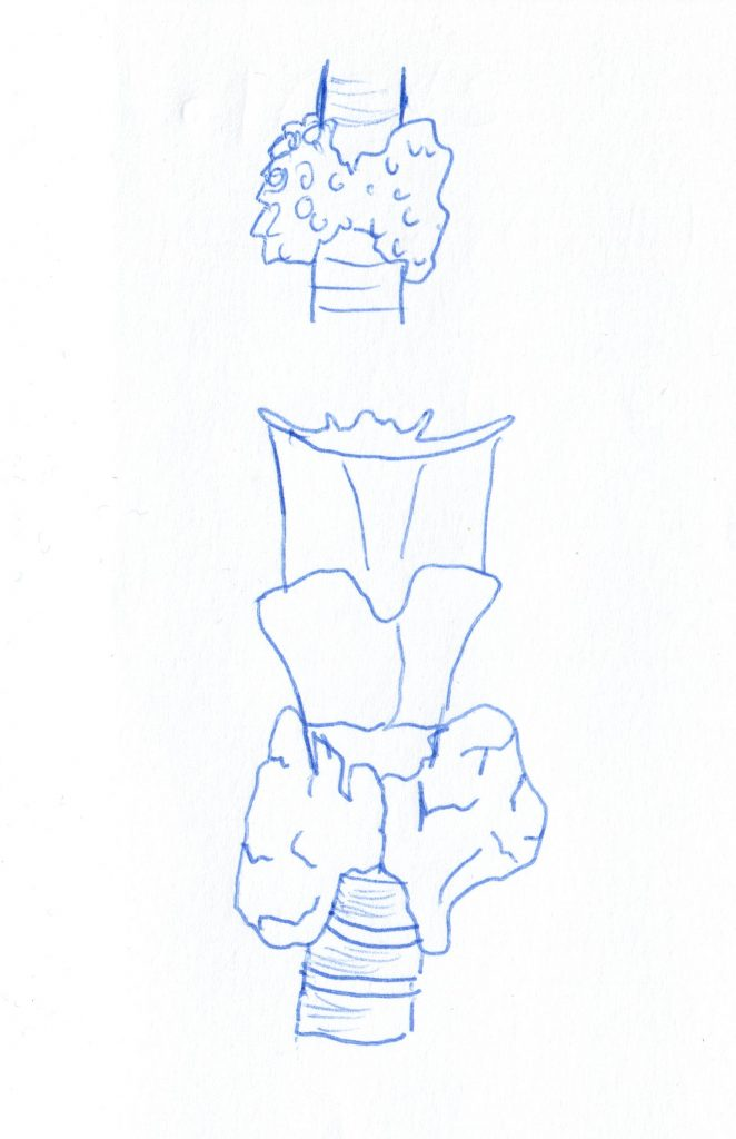 Schilddruese